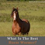 best horse wormer