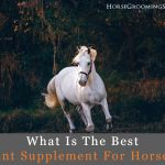 best joint supplement for horses