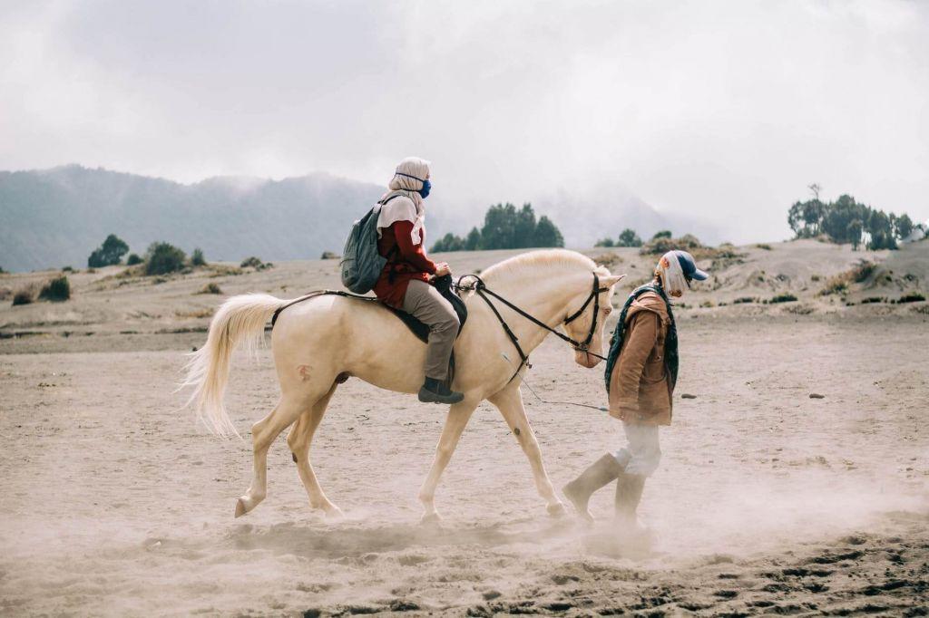 arabian horse price range